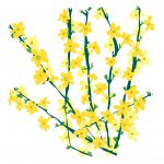 /></td> <td> <h3>Winter Flowering Jasmine (Jasminum Nudiflorum)</h3> <p>A deciduous, non-scented jasmine species that bers bright yellow flowers in late Winter to early Spring. Young wood stays a vibrant green, adding to its Winter charm.</td> </tr> <tr> <td><img class=