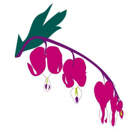 Dicentra (Bleeding Hearts)