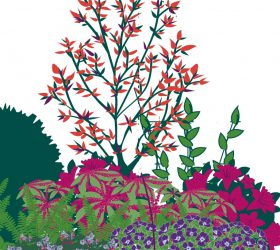 Plant a Border in the Shade