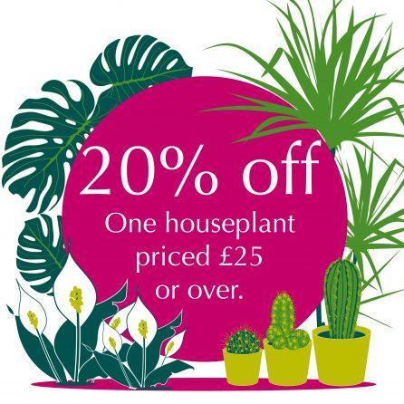 Give a houseplant a home!